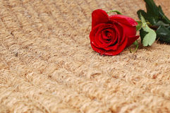 Red Rose on Texture  Background. Valentine Card Royalty Free Stock Photo