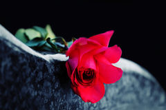 Red rose on tombstone. Red rose on the tombstone Stock Photos