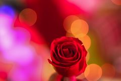 A red rose tone is optimism and jubilation. Man holding a red rose which is the symbol of love in bokeh background stock photos