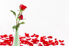 Red rose on valentine day Royalty Free Stock Photography