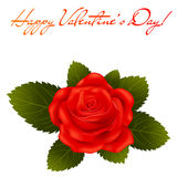 Red rose. Valentine's day greeting card Royalty Free Stock Images