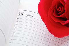Red rose on valentines day Stock Photography
