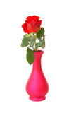 Red rose in vase Stock Image