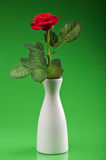 Red rose in vase Royalty Free Stock Image
