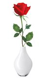 Red Rose in Vase isolated over white Royalty Free Stock Photos