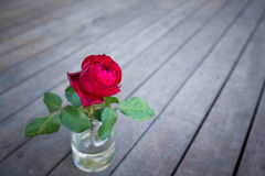 Red rose in vase Royalty Free Stock Photos