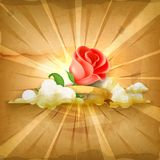 Red rose, vector background Royalty Free Stock Image