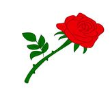 Red rose. Vector flower roses , aromatic plant flower Rose,a bouquet of roses Stock Images