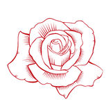 Red Rose Vector. Red Rose in Vector format, good for any use: tattoo, illustration, etc stock illustration