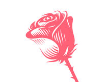 Red rose - vector illustration, emblem on white background Royalty Free Stock Photos