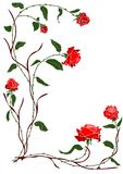 Red rose vine. Vector - branch red rose vine Royalty Free Stock Photo