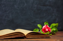 Red rose on a vintage book on dark background stock photography