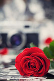 Red rose and vintage camera on wooden board, photography concept Stock Photos