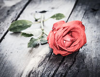 Red rose, vintage love theme Stock Images