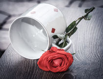 Red rose, vintage love theme Royalty Free Stock Photography