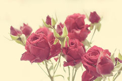 Red Rose vintage photo Stock Images