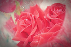 Red rose vintage style Stock Photos