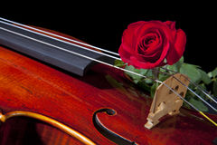 Red Rose and Violin Viola Royalty Free Stock Photos