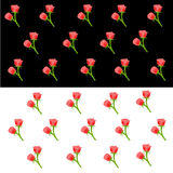 Red Rose wallpaper. In black and white background Royalty Free Stock Photo
