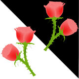 Red Rose wallpaper. In black and white background Stock Photography