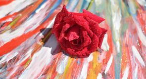 A red rose, washed by raindrops, leaning against the colors of the rainbow royalty free stock photo