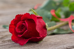 Red rose in water droplets on wooden table Royalty Free Stock Photography