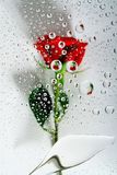 Red rose in water drops 1. Red rose on white background reflections in water drops Stock Photos