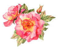 Red rose watercolor illustration Royalty Free Stock Photos