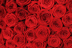Red rose wedding arrangement Stock Images