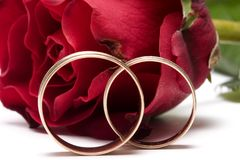 Red rose - wedding concept. Red rose isolated on white - wedding concept Royalty Free Stock Photo