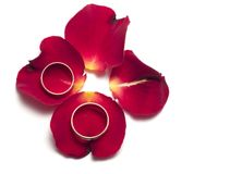 Red rose - wedding concept. Red rose isolated on white - wedding concept - congratulations Stock Photo