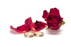 Red rose - wedding concept. Red rose isolated on white - wedding concept - congratulations Royalty Free Stock Image