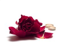 Red rose - wedding concept Stock Photos