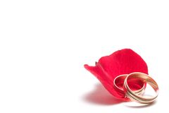 Red rose - wedding concept Royalty Free Stock Image