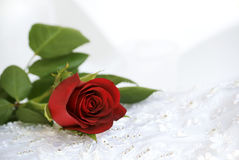 Red rose on wedding lace Royalty Free Stock Photo