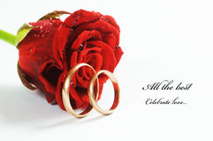 Red rose and wedding ring Stock Image