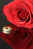 Red Rose and Wedding Ring Stock Photography