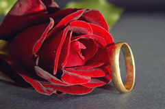 Red rose and wedding ring Royalty Free Stock Photos