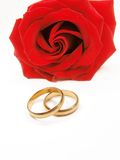 Red rose and wedding rings. Isolated Royalty Free Stock Photo
