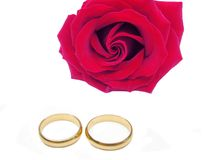 Red rose and wedding rings. Damask red rose and wedding rings isolated on white background Stock Photography