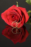 Red Rose and Wedding Rings. One red rose, two wedding rings and their relections Royalty Free Stock Image