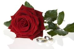 Red rose and wedding rings. Isolated on white background Stock Photos