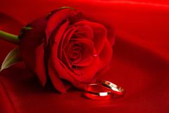 Red Rose with a Wedding Rings. Flower wedding rings rings red rose close-up love closeup Stock Photos