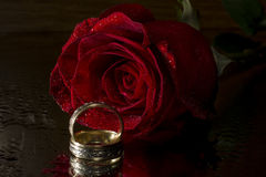 Red  rose and wedding rings. Isolated on  black  background Royalty Free Stock Photos