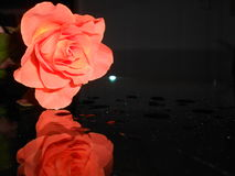 Red rose. A red rose which lays on a glass table Royalty Free Stock Photography
