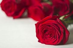 The red rose is a white Royalty Free Stock Images