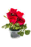 Red rose on white. Royalty Free Stock Photos
