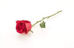 Red rose. On white background Royalty Free Stock Images