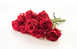 Red rose. On white background Stock Photos