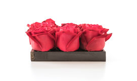 Red rose. On white background Stock Image